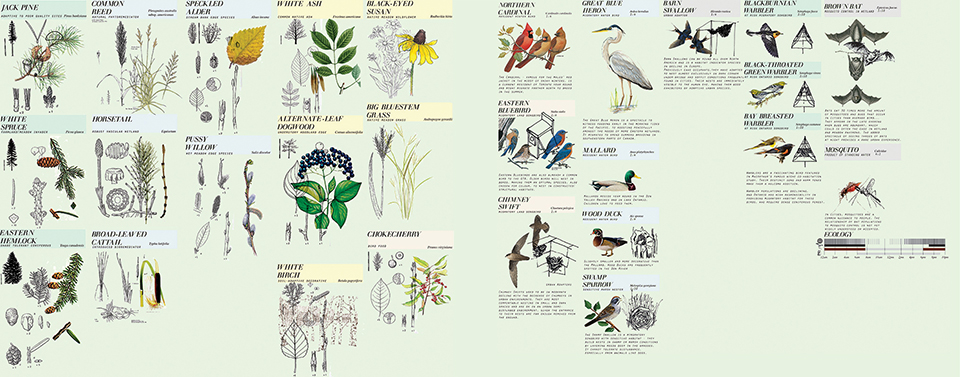 Vegetation is habitat zone specific to biotic communities and also chosen for specific spatial qualities provided along the path. Key species of birds were chosen for their representative qualities and their unique niches according to biotic habitat type.