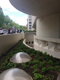 Less-seen plantings on the Guggenheim