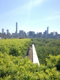 Two forests: the Met roof garden and Central Park