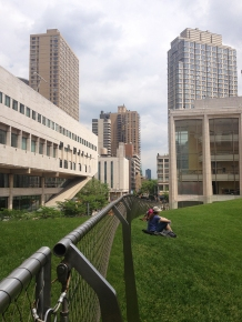 "the Lincoln Centre's Green Roof ""meadow"""